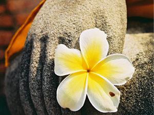 Tourner ensemble la fleur du Dharma
